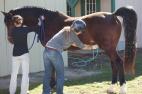 washing horse genitals